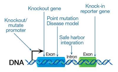 Precision-gene-edit_v2