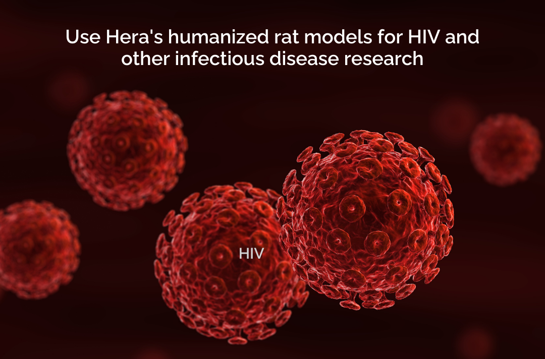 Hera BioLabs - Blog - Emerging Trends Utilizing Humanized Rat Models for Investigating Strategies Against HIV and Associated Pathologies